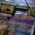 Animali ammassati nelle gabbie durante la Madonna del Carmine