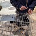 """Gatto imprigionato per cinque giorni tra le impalcature: oggi è  """"liberazione """" anche per lui"""