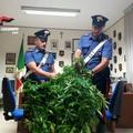 Blitz dei carabinieri nelle campagne di Andria: ritrovata anche un'auto rubata a Trani