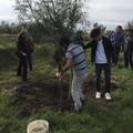 Boccadoro, piantumati nuovi alberi da Legambiente in onore di Guido Melega