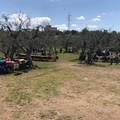 """Danza e poesia, al Parco Santa Geffa è l'ora di  """"Danzasìa """""""