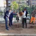 Scuola Baldassarre, piantumati nuovi alberi in giardino
