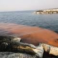 Il mare di Trani si colora di arancione: forse è colpa di un'alga