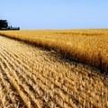 Grano in Puglia, Coldiretti: «Inaccettabile ribasso dei prezzi»