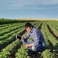 Al Comune di Trani uno sportello di assistenza per gli agricoltori