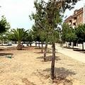 Piantati nuovi alberi in piazza Madre Teresa