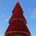 Trani, in piazza Quercia si accende il grande albero 3d di Despar Centro-Sud