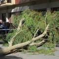 Forti raffiche di vento: oggi in Puglia è allerta arancione