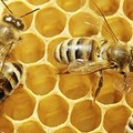 Sciami d'api in pieno centro: rimossi due alveari