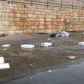 Un pessimo spettacolo sul porto dopo la vendita del pesce