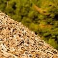 Centrale a biomasse, Legambiente all'attacco