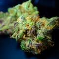 Legaldelivery, lo shop con le migliori varietà di marijuana legale