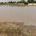 Maltempo, Coldiretti Puglia: «Sos frutta estiva e pomodori per grandinate e bombe d'acqua»