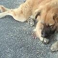 Cane sulla 16 bis, soccorsi tardivi