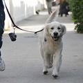 Stop alla violenza sugli animali: oggi sfilata canina in Piazza della Repubblica