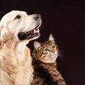 Tutela degli animali, il Consiglio approva il nuovo regolamento cittadino