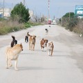 Randagismo, rinnovata copertura assicurativa per danni causati da cani di proprietà comunale