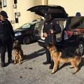 Armi, droga e auto rubate: arrestate nella notte sei persone che operavano anche a Trani
