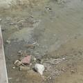 Spiaggia di Colonna, tra sporcizia e scarti edilizi