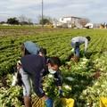 Lavoro agricolo nella Bat, un terzo degli addetti senza tutele