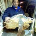 Tartarughe, un centinaio gli esemplari recuperati dalla marineria di Trani
