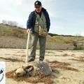 Matinelle, rimosse le tartarughe decomposte