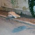 Amianto abbantonato a Colonna da una settimana