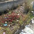 Ancora rifiuti in via Duchessa d'Andria: fuori dai bidoni amianto e ciliegie