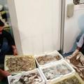 Sequestrate 8 tonnellatedi prodotto ittico sulla SS16 tra Trani e Bisceglie