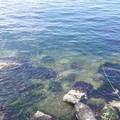 Spiagge inquinate a Trani, Legambiente: «I dati del 2018 non sono ancora disponibili»
