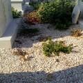 Cimitero, le sterpaglie rendono impraticabile il passaggio