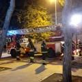 Ramo pericolante nella pinetina di via Andria, l'intervento dei vigili del fuoco scongiura pericoli