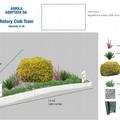 Il Rotary Club adotta l'aiuola spartitraffico sul lungomare Chiarelli
