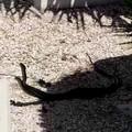 I guardiani del cimitero: due serpenti in lotta