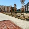 """Pinetina di """"Via Andria"""", lavori bloccati e verde oramai compromesso"""