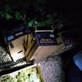Un altro furto d'uva sventato dalle Guardie Campestri
