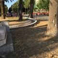 """Piazza Plebiscito, chi cura il  """"verde pubblico?"""