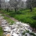 Zona Capirro, lapidi abbandonate tra i mandorli in fiore