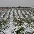 Emergenze agricole, in arrivo le agevolazioni per i danni da maltempo 2018