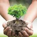 5 consigli per prenderti cura al meglio del tuo giardino