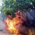 Convenzione antincendio boschivo, ancora nessun accordo