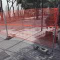 Ex pinetina di via Andria, si potevano salvare 19 alberi e non 7