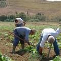 Protesta delle cooperative agricole, Losito: «Non permettiamo a nessuno di privarci del nostro futuro»