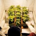 Deep Web: droga, armi, farmaci ordinati online
