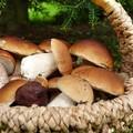 Raccolta di funghi e tartufi in Puglia, Emiliano firma l'ordinanza