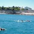 Oggi a Trani la diciannovesima edizione della gara di nuoto, Natalonga
