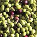Coldiretti Puglia, causa maltempo la produzione di olio cala al -65%