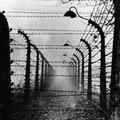 Pappalettera: «Nazismo e Fascismo non muoiono mai»