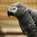 «Ti querelo, vedrai» gracidò la gazza al pappagallo