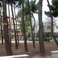 Nuovi alberi in città, Trani ha bisogno di ossigeno: 10 in pagella per Branà e Di Lernia